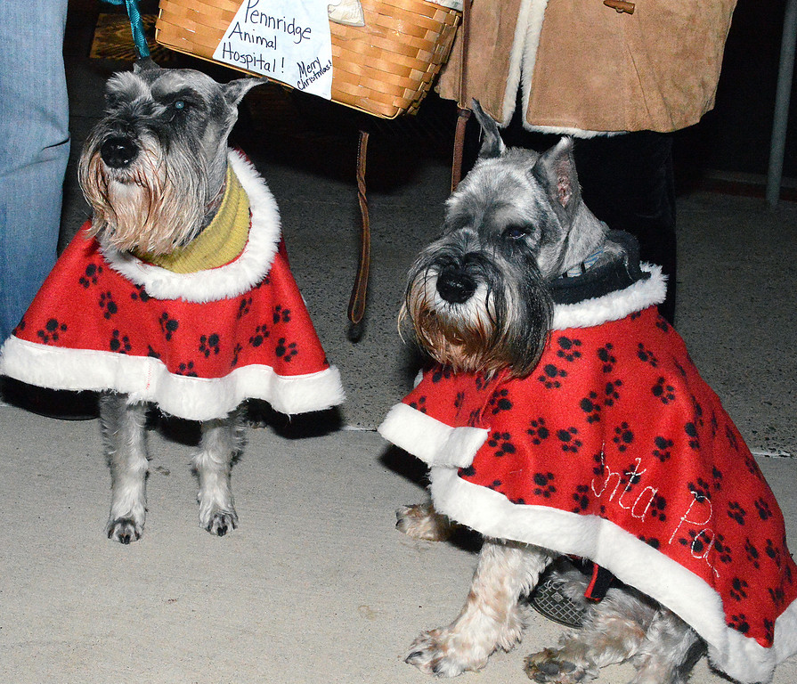 Description of . News-Herald photo — DEBBY HIGH Mich and Cali, standard schnauzers of Pennridge Animal Hospital, joined in the night's festivities.