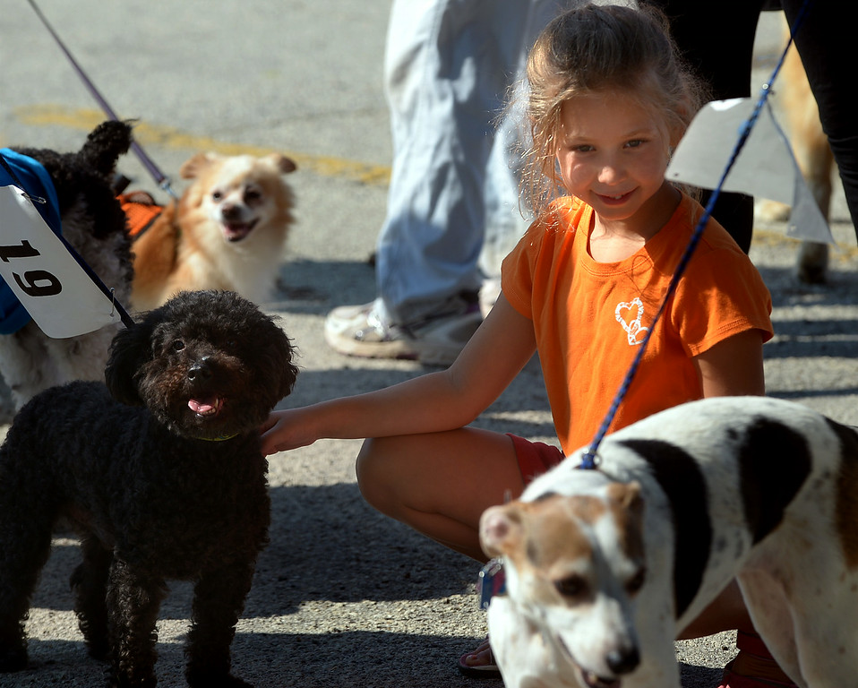 Description of . There are just too many dogs for Ella Kanaplue to pet and not enough time before the Ambler Dog Days Parade Saturday, Aug. 9, 2014.  Montgomery Media staff photo by Bob Raines