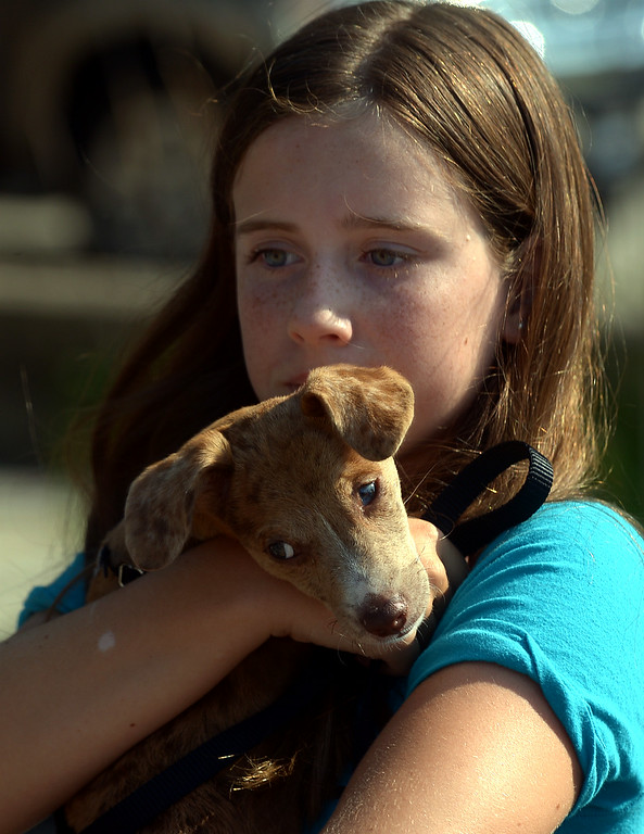Description of . Riley Pearse holds her rescue dog, Jack, as she waits to register for the Ambler Dog Days Parade Saturday, Aug. 9, 2014. Jack and Riley won the Judges' Choice Award following the parade. Montgomery Media staff photo by Bob Raines