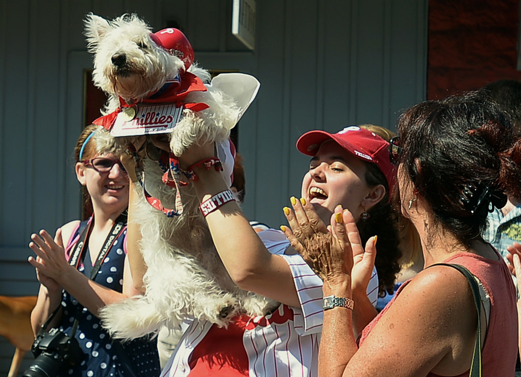 Description of . Dante, a West Highland terrier, and owner Marilee Gallagher were judged Best Dressed in Sports Attire following the Ambler Dog Days Parade Saturday, Aug. 9, 2014.  Montgomery Media staff photo by Bob Raines