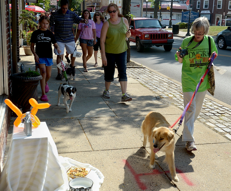 Description of . Several businesses along Butler Ave. set out water and biscuits for the parading pooches during Ambler Main Street's Dog Days Saturday, Aug. 9, 2014.  Montgomery Media staff photo by Bob Raines