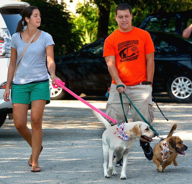 Description of . Kelly Kreamer with her Labrador, Luna, and Matt Curtis with his beagle/bassett mix, Mr. Weasley, lead their pets to the registration table for the Ambler Dog Days Parade Saturday, Aug. 9, 2014.  Montgomery Media staff photo by Bob Raines